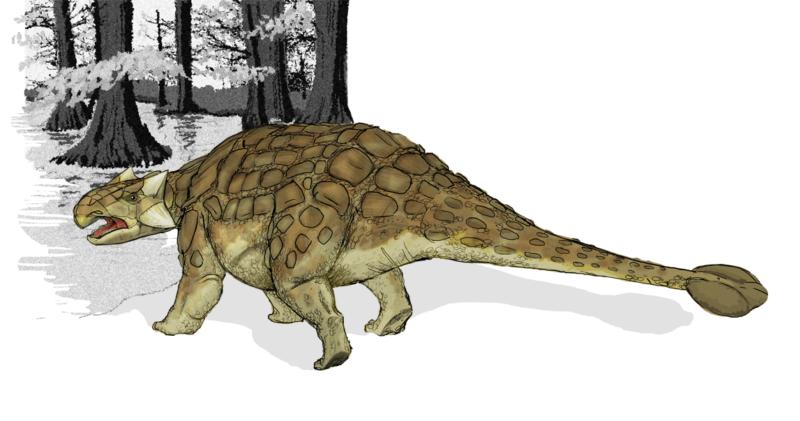ankylosaurus_dinosaur