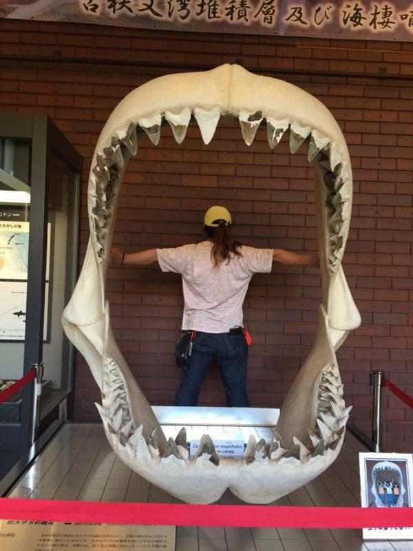 メガロドンの歯